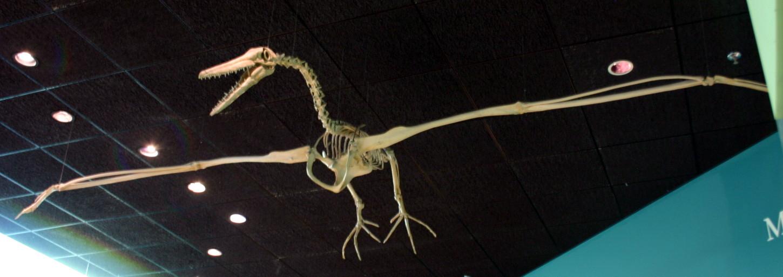 Os maiores animais do mundo - Pelagornis sandersi