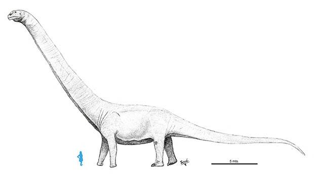 Os maiores animais do mundo - Patagotitan mayorum