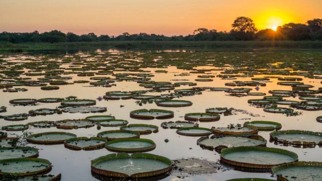 Ecossistemas Brasileiros - Pantanal