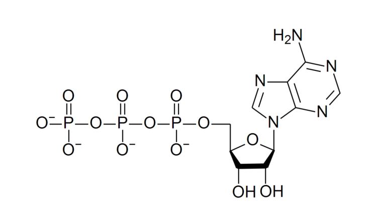 ATP estrutura