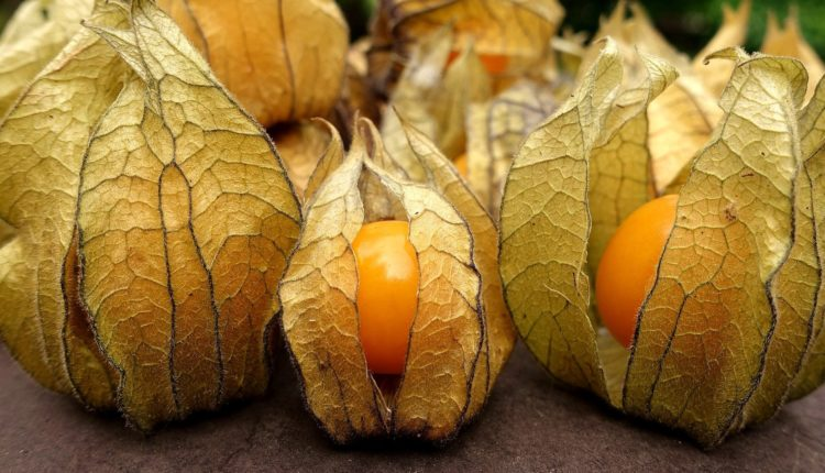 Fruta Physalis