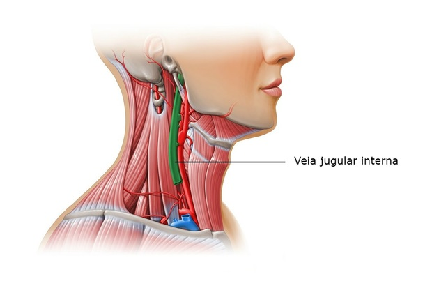 Veias do corpo humano - Veia jugular