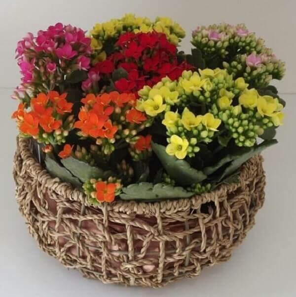 Plantas fáceis de cuidar - Kalanchoe