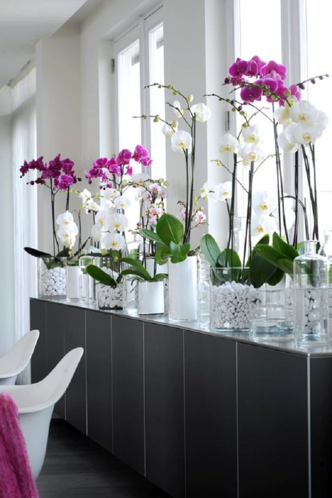 Plantas fáceis de cuidar - Orquídea