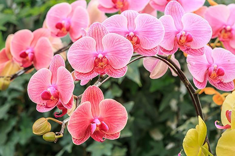 Plantas para dentro de casa - Orquídeas