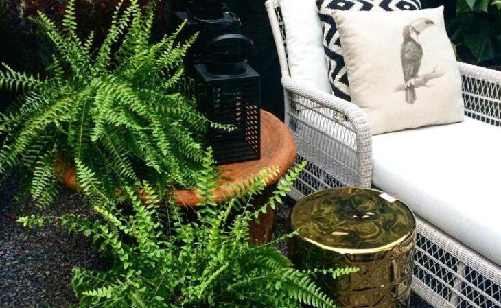 Plantas fáceis de cuidar - Samambaia
