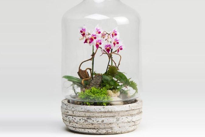 Terrário - Mini orquídea